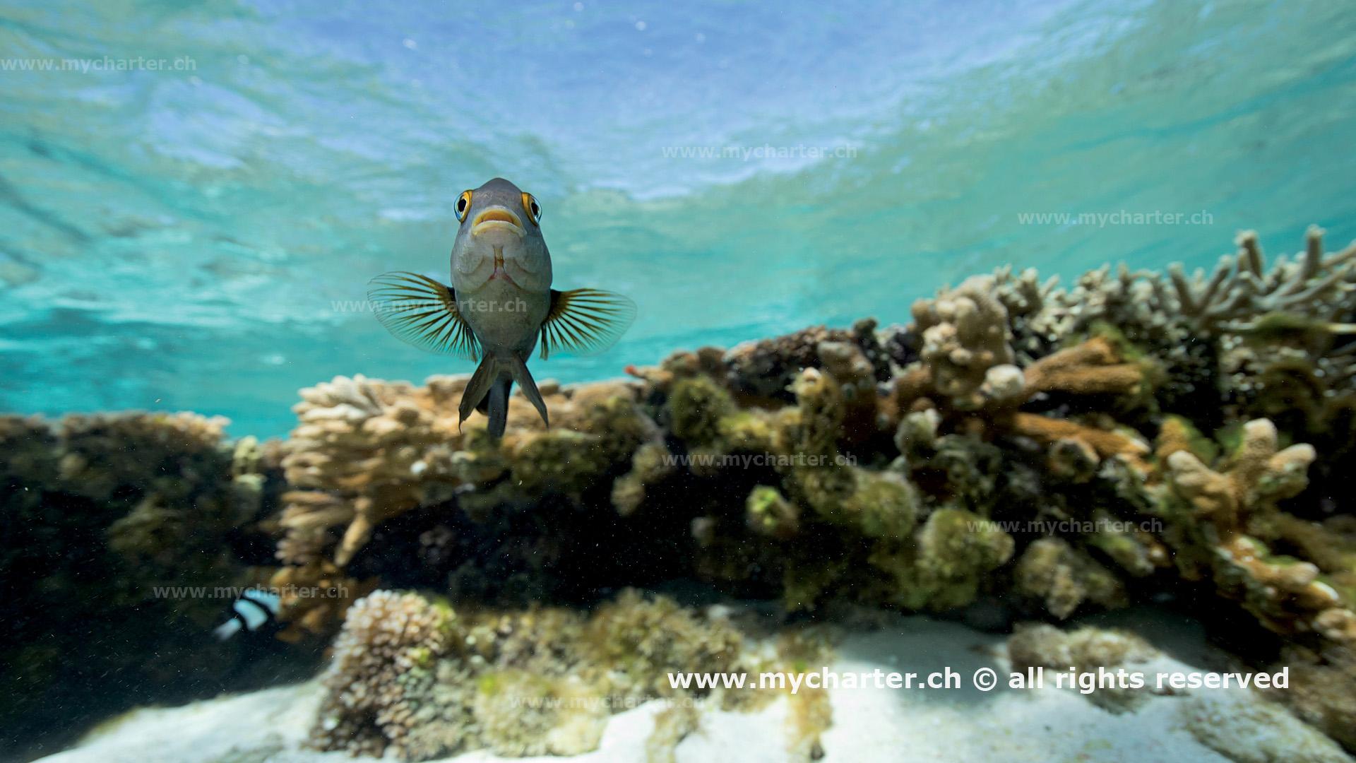 segeln Australien - Fisch