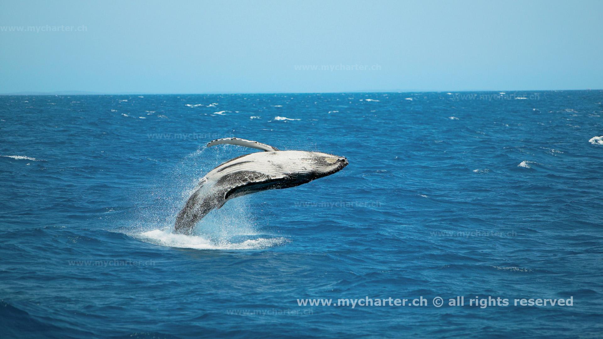 crewed charter Australien - Wal