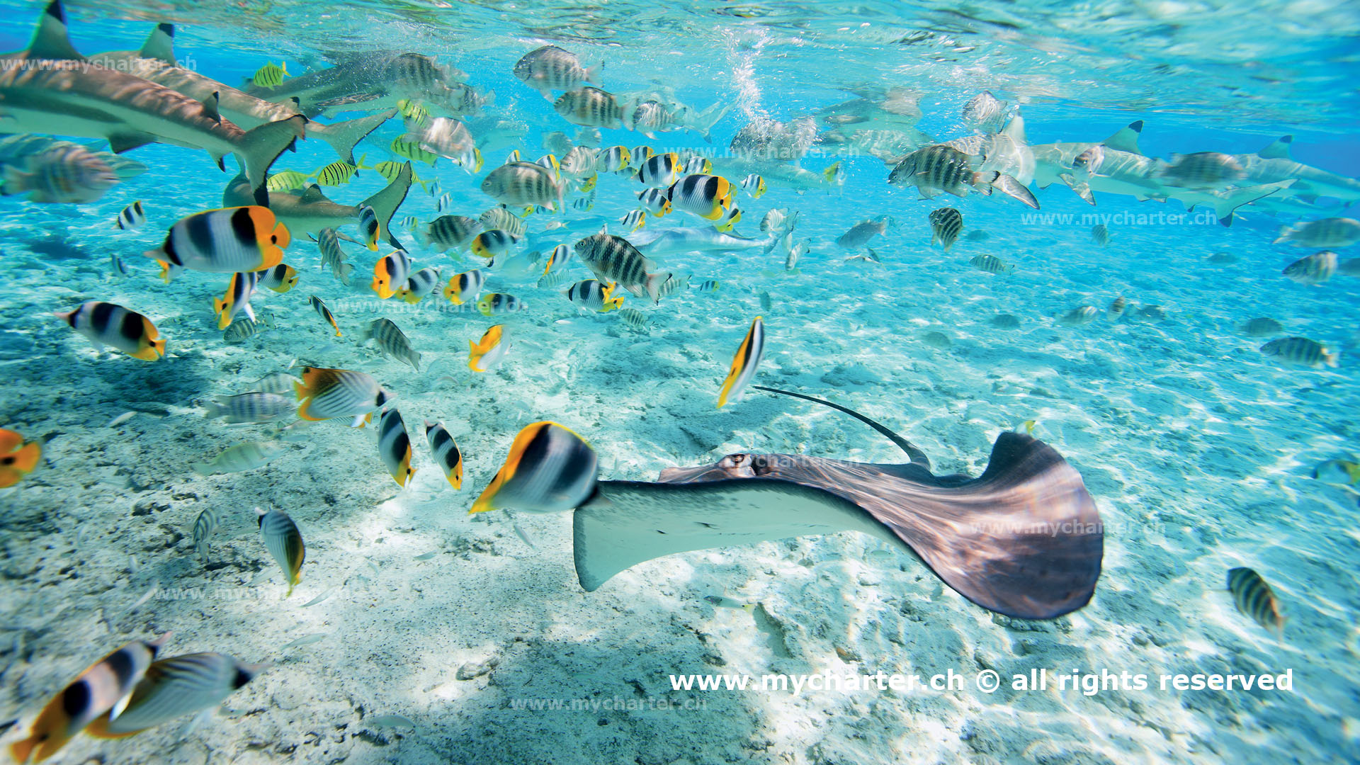 Yachtcharter Tahiti Insel Bora Bora