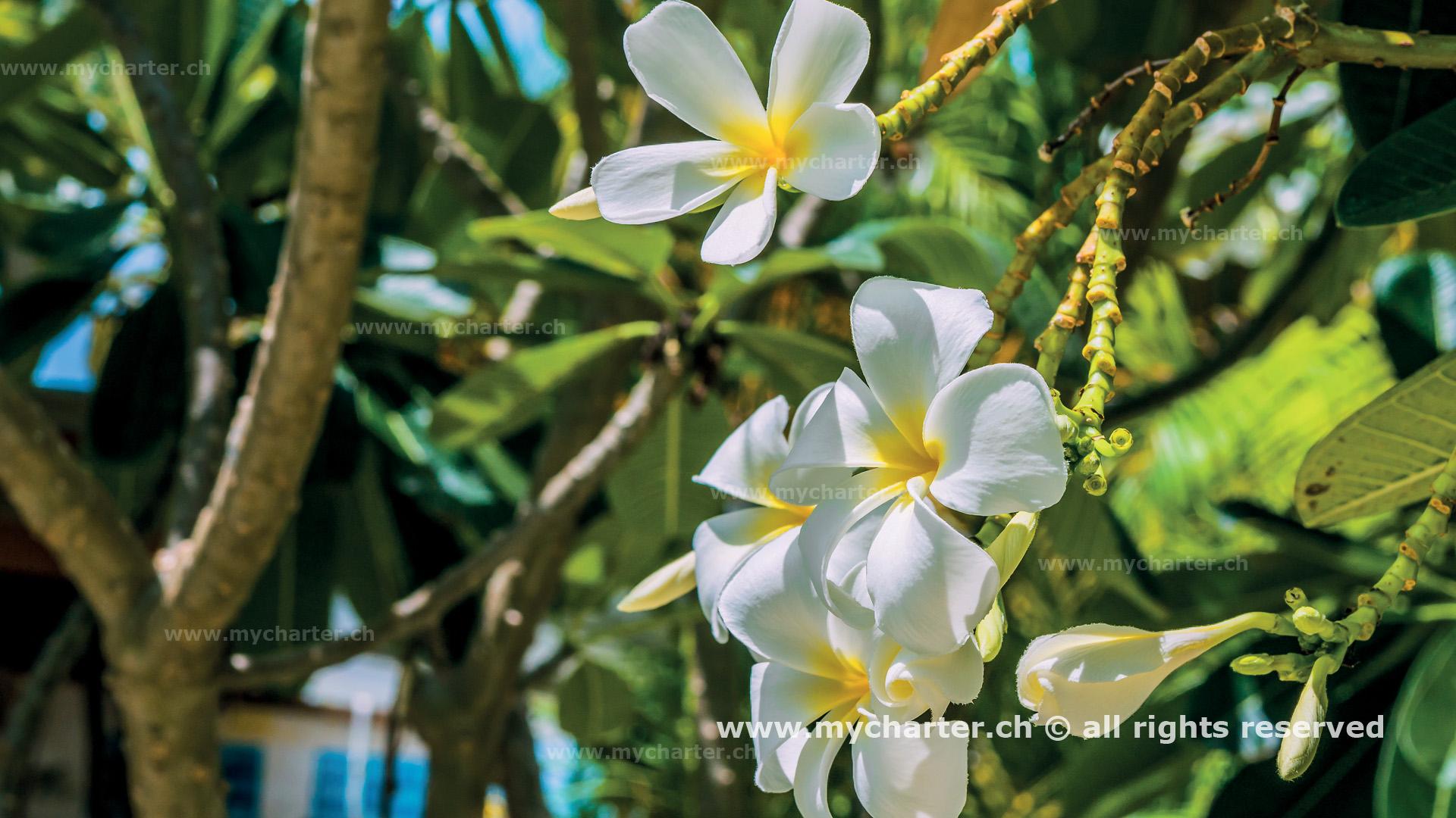 crewed charter Tahiti Tiare Blume